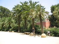 21 Palm trees in Parc Guell